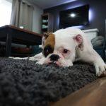 Luksusowe dywany do sypialni